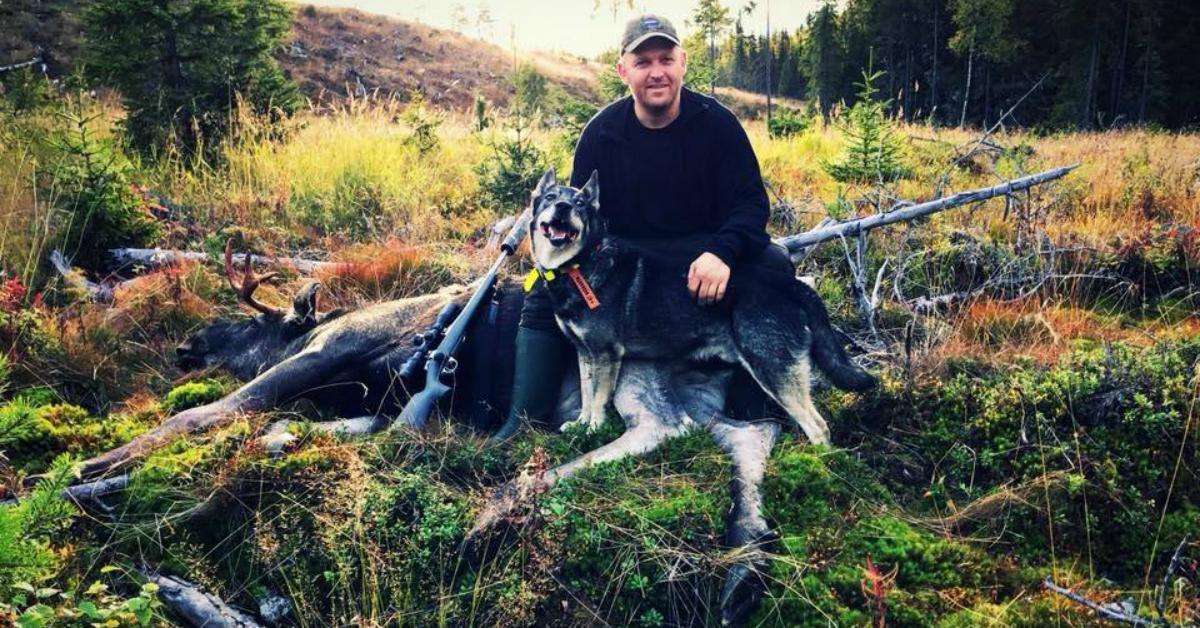 Jan Robert Sveen – Jaktutstyr, hundetrening, elgjakt og jaktbil!