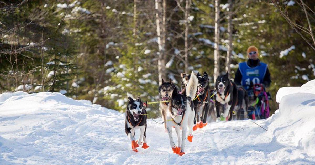 Hundehold, hundetrening og ernæring med Arnt-Magnus Gamst