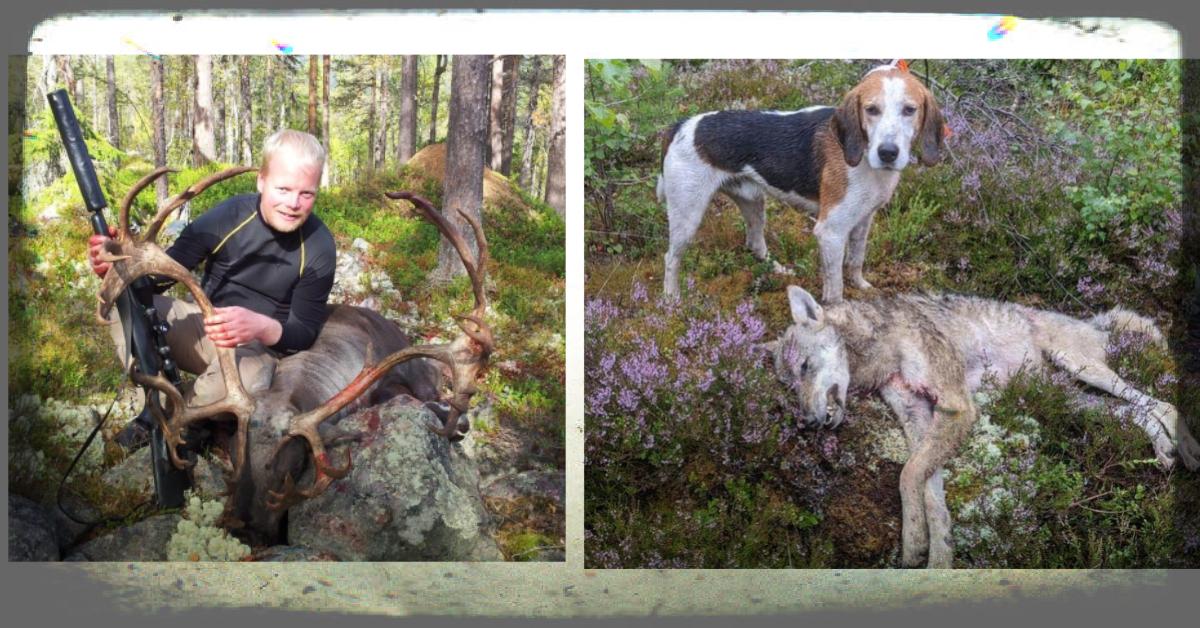 Reinsjakt, Sibir og ulvejakt med hund – Simen Steigen