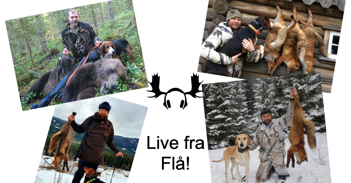 Når jakta ikke går som planlagt – Live fra Flå