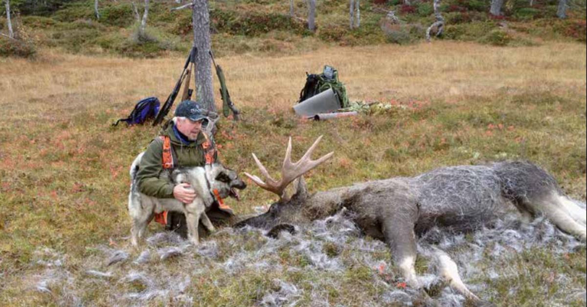 Topphunden Toro – Arnulf Storrøsæter og Jan Arne Berdal