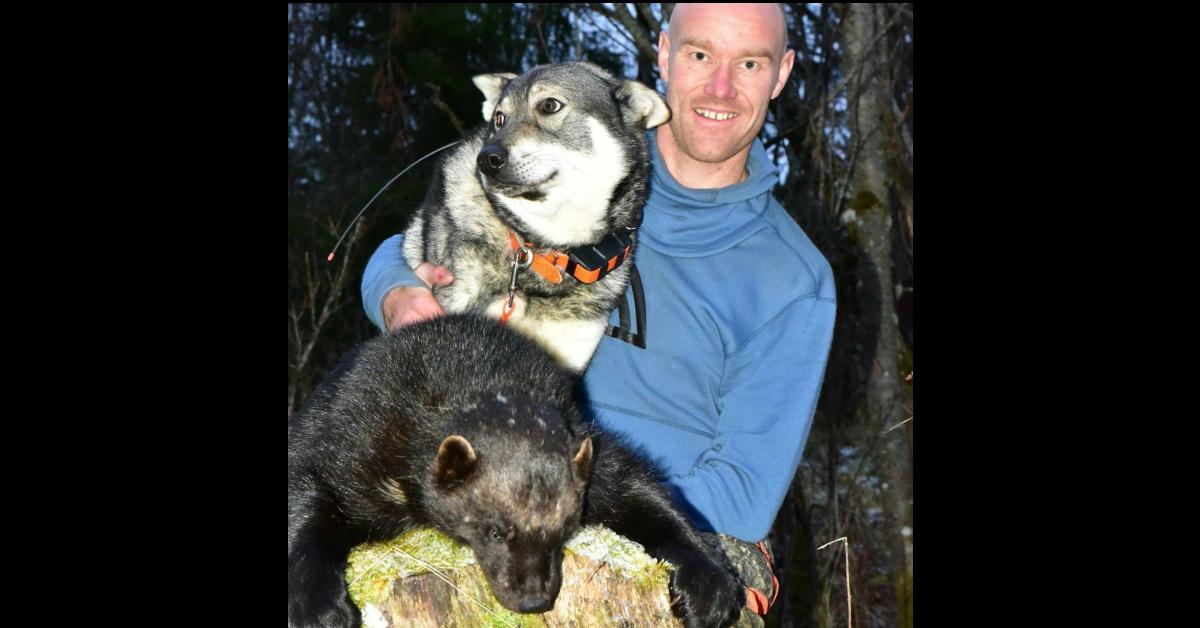 Jervejakt med hund – Jan Erik Vik