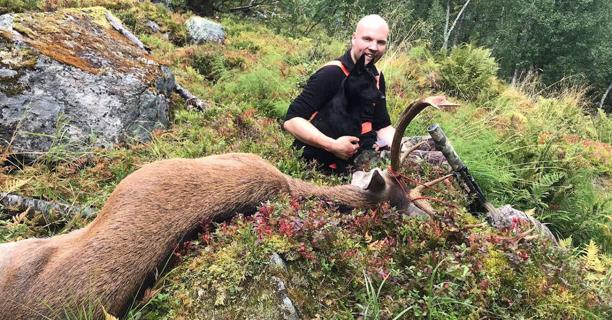 Hjort og elgjakt med bandhund – Svenn Magnus Runde