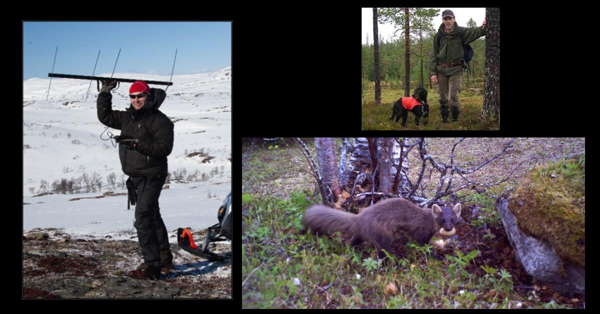 JaktiLierne del 2 – Resultatene av 5 år med fokus på smårovvilt – Pål Moa og Bjørn Roar Hagen