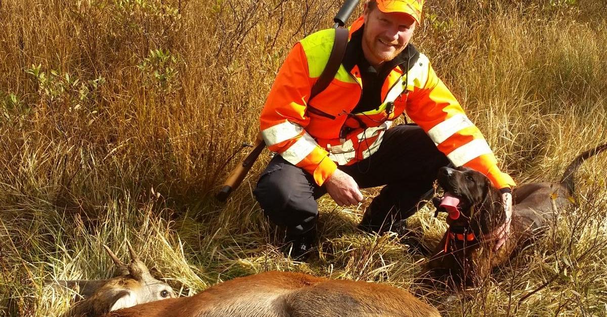 Kortdrivende hunder på hjort og rådyr, Wachtelhund og ettersøk med Hans Inge Justnes
