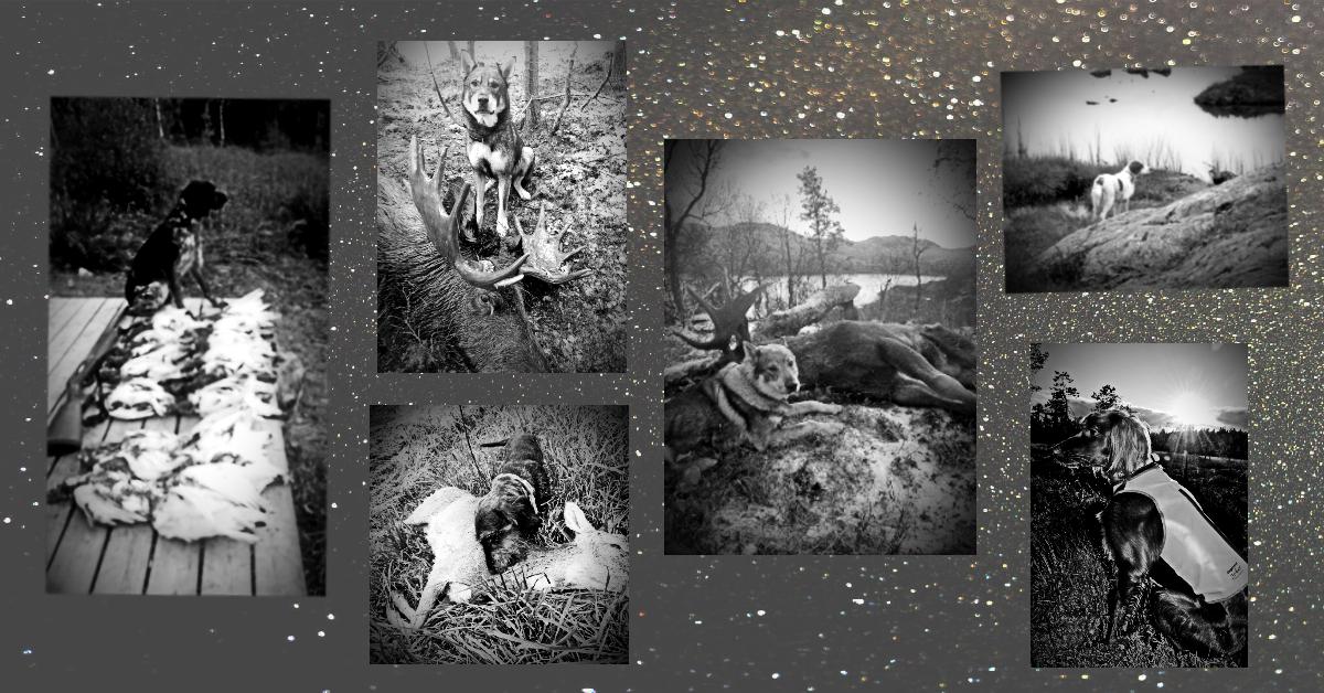 Hundene på de evige jaktmarker