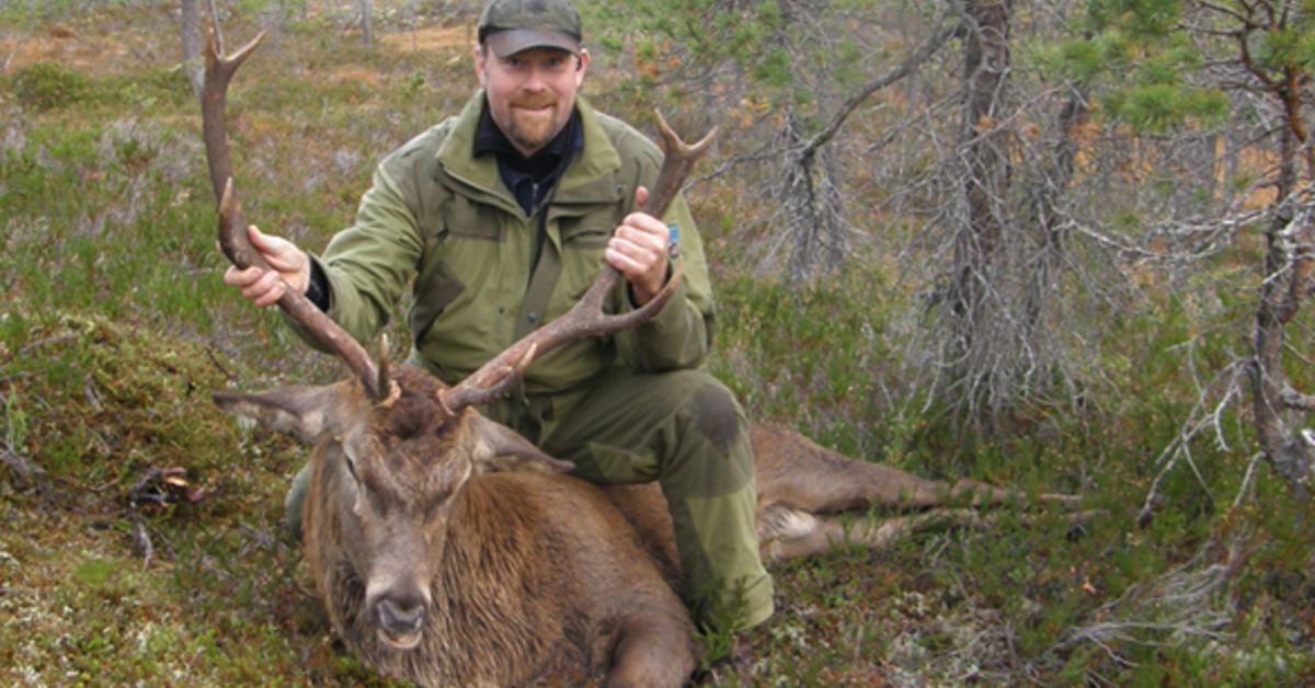 Hjort og hjortejakt med Erling Meisingset